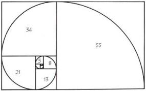 fibonaccispiral11
