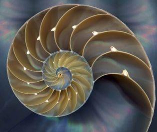 nautilus-shell